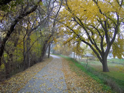 The walking trail in Cambridge, Neb., goes into the mist. (Rosie Stockton)