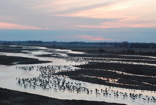 Sunset along the Platte is often spectacular. With sandhill cranes standing in its shallow flows, visible from one horizon to the other, it's even better. It is a spiritual experience for many people. (Alan J. Bartels)