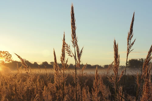 Big bluestem prairie grass at Homestead National Monument, Beatrice, Neb. (iStockPhoto/CarbonBrain)