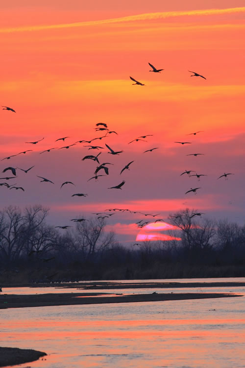 Sunset with the cranes. (Paul A. Johnsgard)