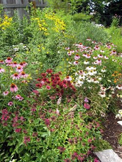 Milkweed, bee balm, rudbeckia, liatris, coreopsis, little bluestem and assorted coneflowers appeal to an array of insects and birds. (Benjamin Vogt)