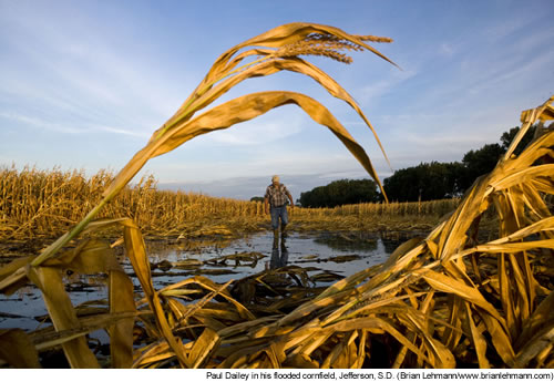 Paul Dailey in his flooded cornfield, Jefferson, S.D. (Brian Lehmann/www.brianlehmann.com)