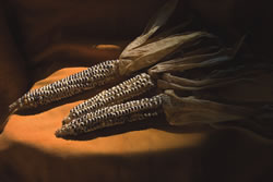 Cobs of Eagle Corn. (NEBRASKAland Magazine/ Nebraska Game and Parks Commission)