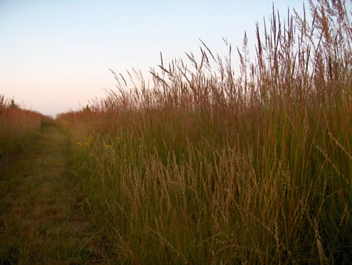 Over the past 20 years, the Wilsons have worked to restore or rehabilitate 40 acres of native prairie. (Jerry Wilson)