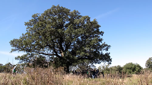 Time under oak is well spent (Quercus macrocarpa, Hitchcock Nature Center, Pottawattamie County, Iowa). (Jack Phillips)