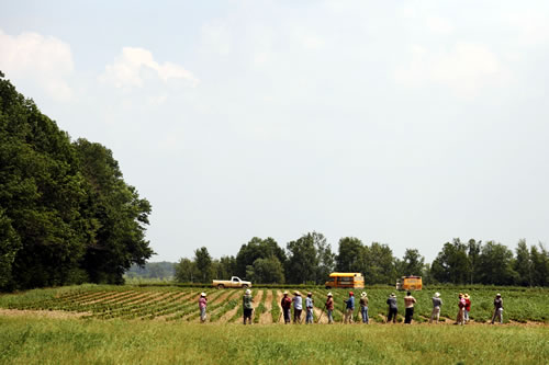 Migrant workers in New Carlisle, Ohio, on a hot July 28, 2011, standing in a row with tools in hand, preparing to enter a field to cultivate the soil around the plants. (JimSchemel/iStockPhoto.com)