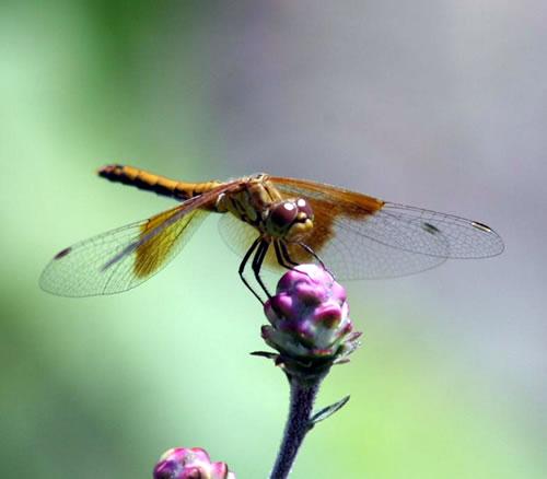 Dragonfly. (Benjamin Vogt)