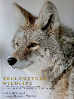 """Yellowstone Wildlife: Ecology and Natural History of the Greater Yellowstone Ecosystem"" by Paul A. Johnsgard"