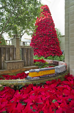 Lauritzen Gardens in Omaha has wonderful poinsettias over the holidays. (Nebraska Tourism)