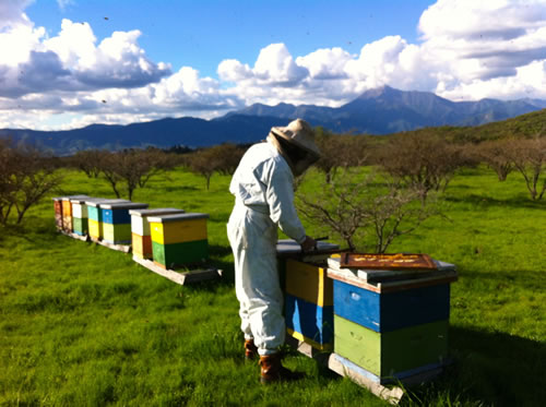 Armando Morales is a beekeeper in Limache, Chile who moves his hives with the flower blooms to produce distinct honey varietals. (Kat Shiffler)