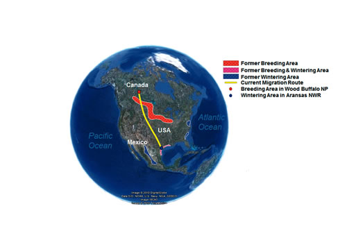 A continental perspective of the historic and current range of the whooping crane in North America, based on imagery from Google Earth.
