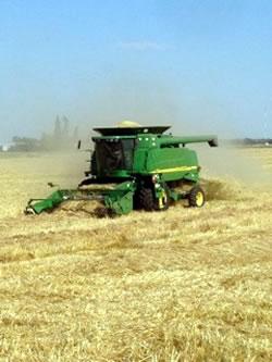 Harvesting with Hoculak's John Deere combine. (OCIA)