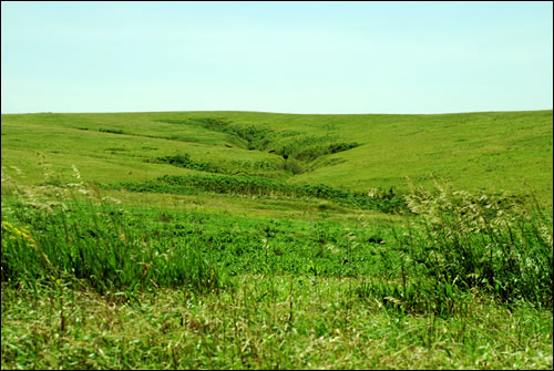 http://www.prairiefirenewspaper.com/files/spring-creek-prairie.jpg